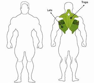 Kettle Bell T-bar Row Exercise Guide