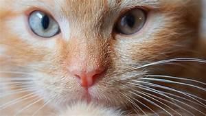 Kaffeesatz Im Garten : tiere rindenmulch und kaffeesatz verscheuchen katzen aus dem garten wohnen ~ Whattoseeinmadrid.com Haus und Dekorationen