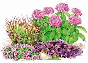 Comment Planter Un Camélia : un jardin qui vous ressemble globe planter ~ Melissatoandfro.com Idées de Décoration