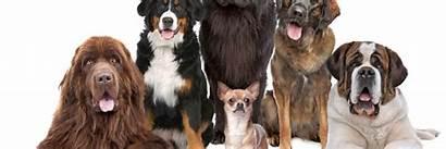 Dog Breeds Desktop