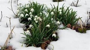 Warten Auf Den Frühling : kalte luft aus osten deutschland muss weiter auf den fr hling warten ~ Watch28wear.com Haus und Dekorationen