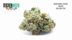 Northern Lights   Tested Weed