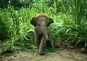 Indian Elephant | Animal Wildlife