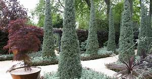 Zypresse Wird Braun : zypresse schneiden zypresse pflanzen pflege schneiden ~ Lizthompson.info Haus und Dekorationen