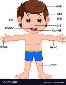 Boy Body Parts Diagram Poster Royalty Free Vector Image