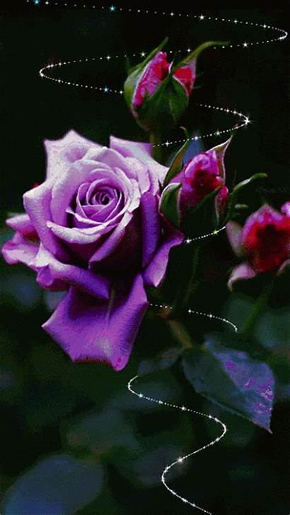 Rose Animation Scraps Decent Animated Roses Purple