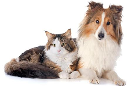 Cat And Dog Cats And Dogs Are Equally Intelligent New Research Reveals