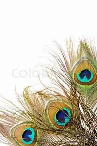 Peacock feather background Stock Photo Colourbox