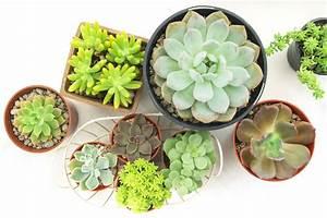 Pflanzen Für Gesundes Raumklima : die besten tipps f r gesunde zimmerpflanzen gartenzauber ~ Indierocktalk.com Haus und Dekorationen