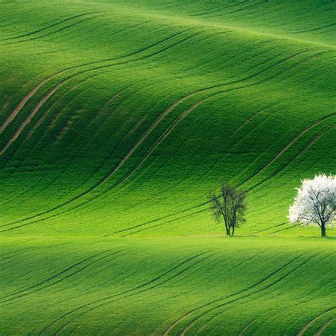 green landscape   green landscape