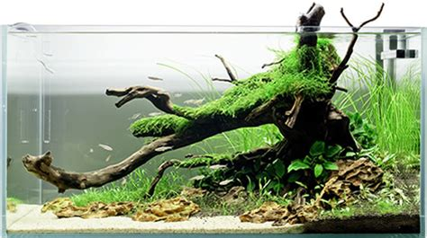 Aquascaping  Seahorse Aquariums Ltd