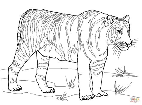 saber tooth tiger coloring page  getcoloringscom  printable colorings pages  print