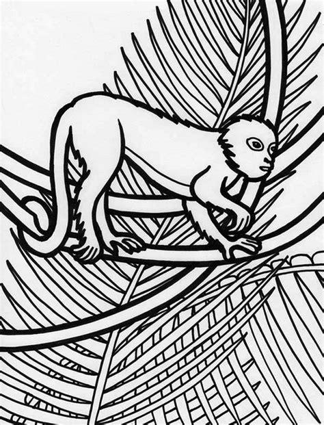 rainforest monkey coloring page  print  coloring pages   color nimbus
