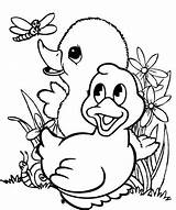 Duck Coloring Pages Fun Ducklings Coloringpagesfortoddlers Children Cool sketch template