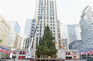 rockefeller center christmas tree 2012 tree set in place
