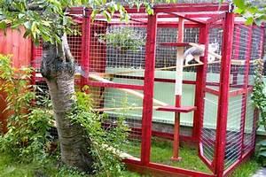 Construire Enclos Pour Chats : enclos pour chat zoologis enclos et chatteries cats cat friendly home catio ~ Melissatoandfro.com Idées de Décoration