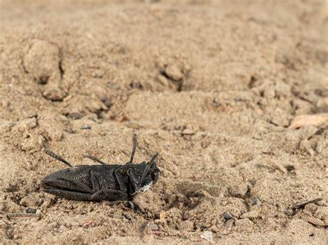 Solarizzazione: il metodo naturale per eliminare gli insetti dall'orto Valfrutta Magazine