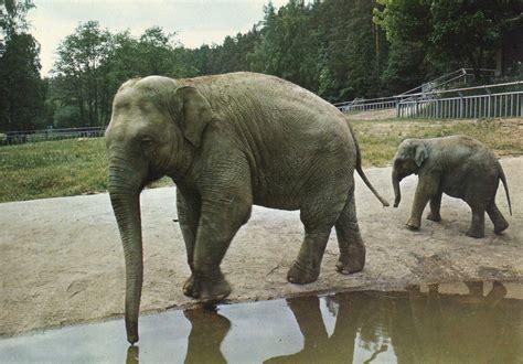 Les Zoos Dans Le Monde  Miejski Ogród Zoologiczny Wybrzeża