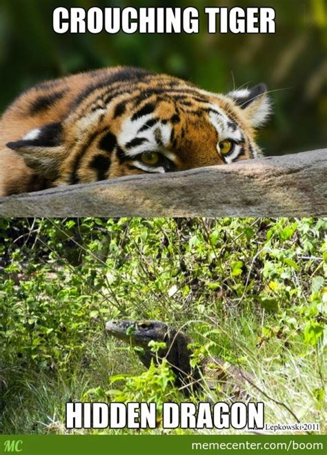 Tiger Meme Crouching Tiger Memes Best Collection Of