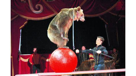 zirkus selbst die zuschauer lassen sich dressieren
