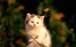 Most Intersetin... Cute Cats