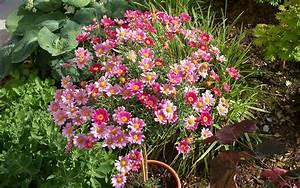 Winterharte Blumen Für Den Garten : straucher fur den garten ~ Whattoseeinmadrid.com Haus und Dekorationen