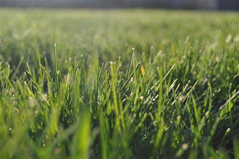 concimazione tappeto erboso potassio essenziale nella concimazione prato a giugno