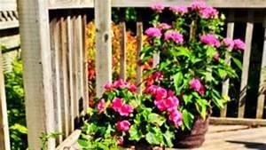 Pflanzen Für Balkon : pflanzen f r balkon und terrasse ~ Sanjose-hotels-ca.com Haus und Dekorationen