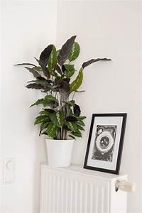 Zimmerpflanzen Sonniger Standort : 5 tipps f r zimmerpflanzen pflege deko ~ Whattoseeinmadrid.com Haus und Dekorationen
