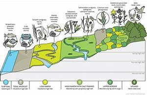 Anatomy Of A Salt Marsh  Infographic  On Behance
