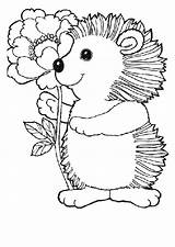 Coloring Pages Hedgehog Hedgehogs Cute Adult Animal Animals Coloringpages1001 sketch template