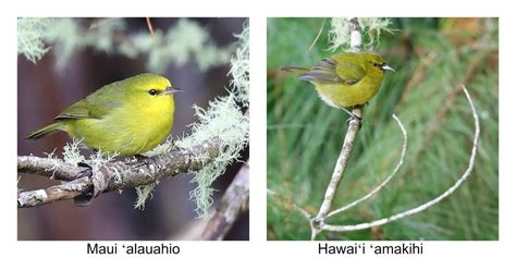 Things To Do Haleakala National Park