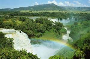 Rainforest Forest Ecosystem