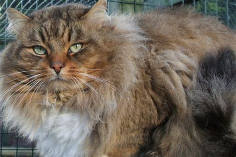ist mein tier zu dick blog tierarztpraxis roediger