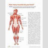 Human Body Systems For Kids Worksheets | 301 x 389 gif 43kB