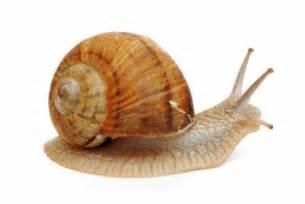 talking photo album i 39 m feeling like a snail in the it 39 s yourz lyrics
