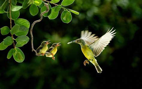 Cute Birds HD Wallpaper Free Download