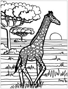 giraffes coloring pages  adults