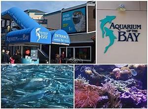 Review - Aquarium of the Bay near Pier 39 in San Francisco ...