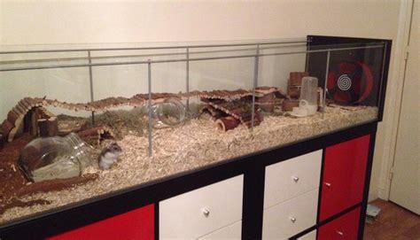 habitat du hamster