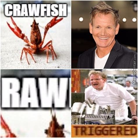 Chef Meme - chef ramsay memes best collection of funny chef ramsay pictures