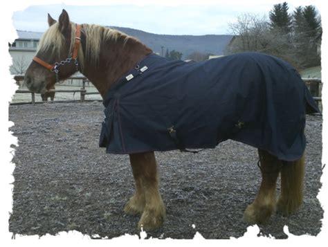 regendecke kaltblut fathimas pferdewelt