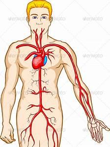 Medical Pictures Info  U2013 Blood Circulation