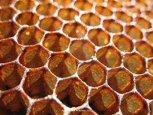Arizona Bee Removal   Professional Bee and Honeycomb ...  Honeycomb