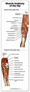 Shoulder Joint Capsule Tissue Picture