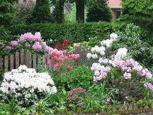 Welche Pflanzen Passen Zu Rosen : mein garten ~ Lizthompson.info Haus und Dekorationen