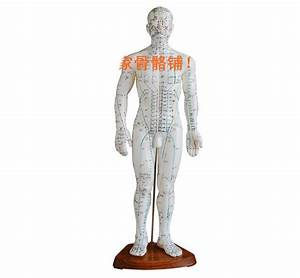 50cm English Human Acupuncture Meridian Points Model Male