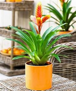 Pflanzen Die Kein Licht Brauchen : welche brauchen wenig licht best kleine pflanzen die ~ Lizthompson.info Haus und Dekorationen