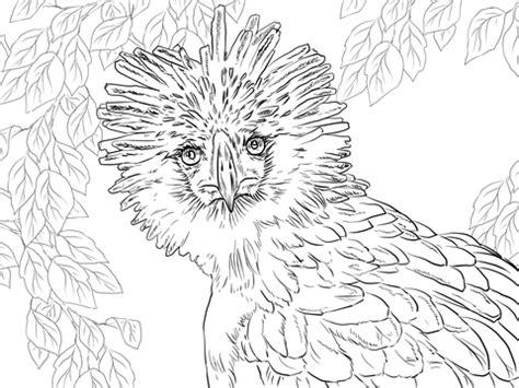philippine eagle portrait coloring page supercoloringcom