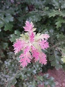 Rote Blätter Baum : rote und gr ne neue eiche treibt auf einem baum bl tter ~ Michelbontemps.com Haus und Dekorationen
